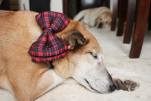 Lana paws red check dog bow tie winter