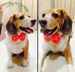 Lana Paws dog bow tie cute orange