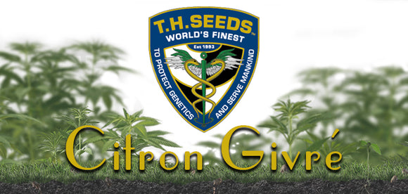 New strain from T.H. Seeds - Citron Givre Birthday Cake Lemon Sorbet selection