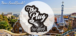 NEW SEEDBANK - The Plug SeedBank from Barcelona!