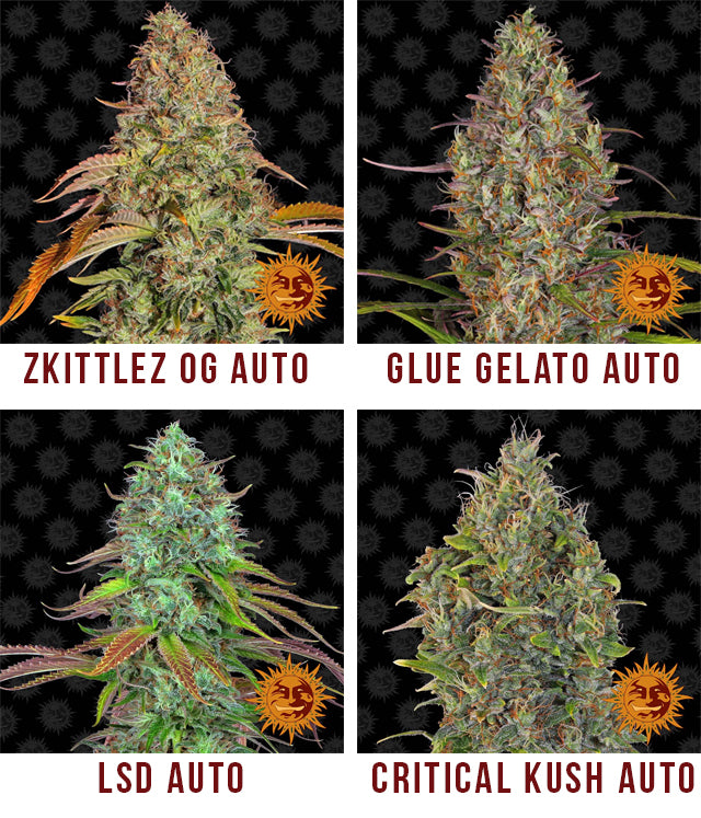 New Barney's Farm auto strains