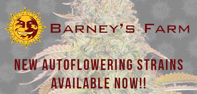 Barneys Farm New strains