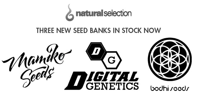 Mamiko Seeds Bodhi Seeds Digital Genetics Natural Selection