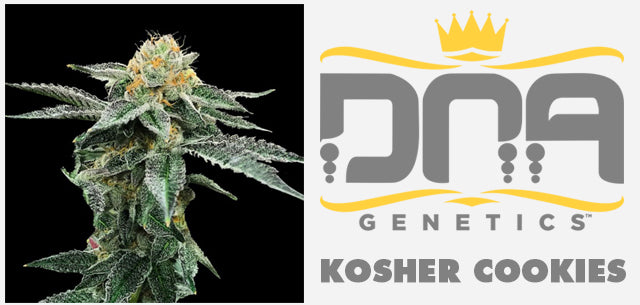 Kosher Cookies seeds DNA Genetics