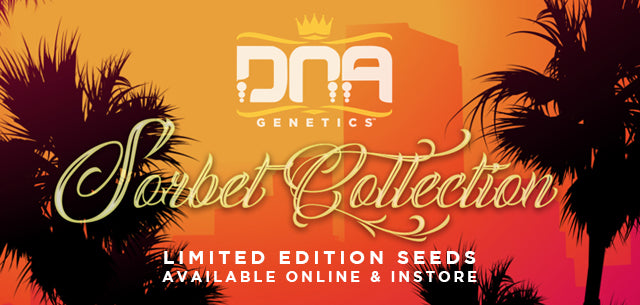 DNA Genetics Sorbet Collection Natural Selection Leeds Seed Shop