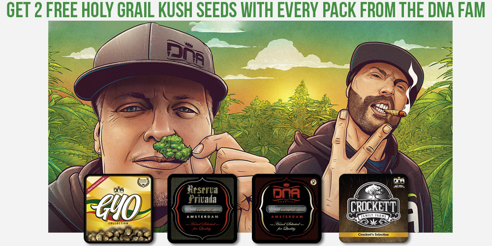 FREE Holy Grail Kush seeds Natural Selection Leeds