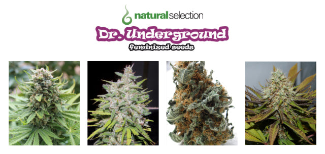 Dr. Underground Seeds Natural Selection