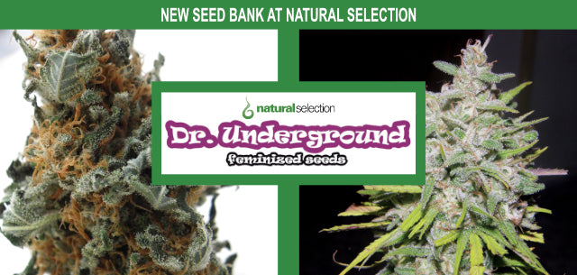 Dr. Underground Seeds Natural Selection Leeds