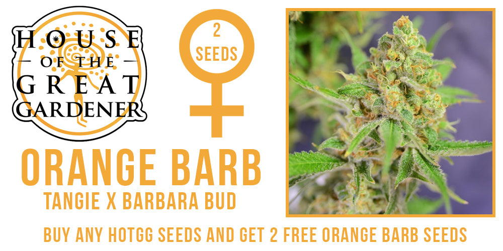 Free Orange Barb seeds