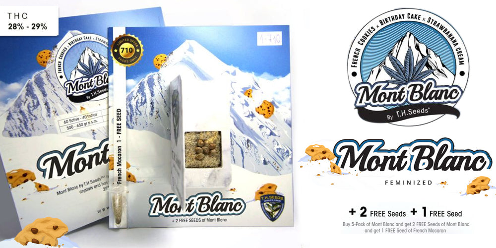Get free Mont Blanc seeds by TH Seeds