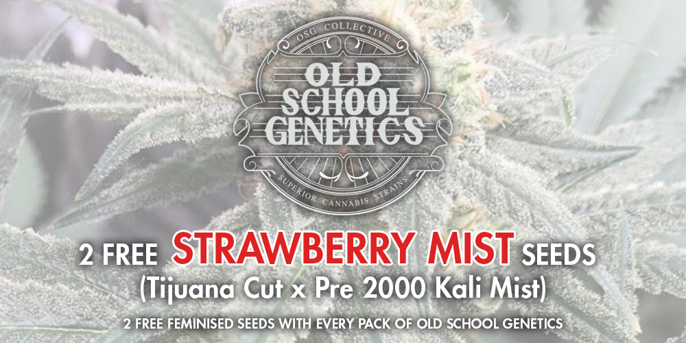 OSC Genetics Natural Selection Leeds
