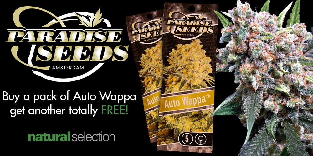 Free Wappa Seeds Natural Selection