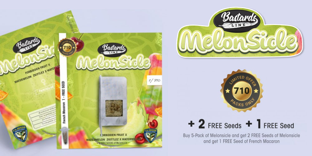 Free MelonSicle seeds Natural Selection