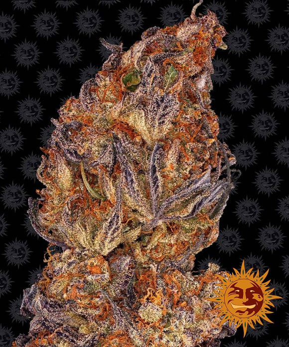 Barney's Farm Runtz AUTO Feminised Seeds