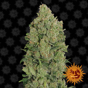 Barney's Farm NYC Diesel AUTO Feminised Seeds