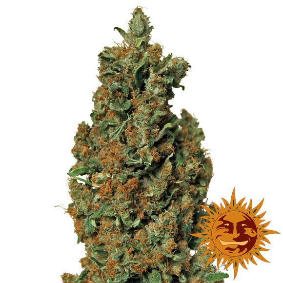 Barney's Farm Red Diesel Feminised Seeds