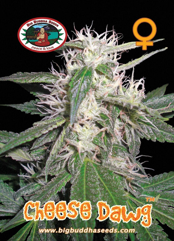 Big Buddha Cheese Dawg Feminised Seeds