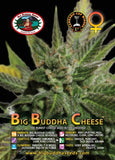 Big Buddha The Original Cheese Feminised Seeds