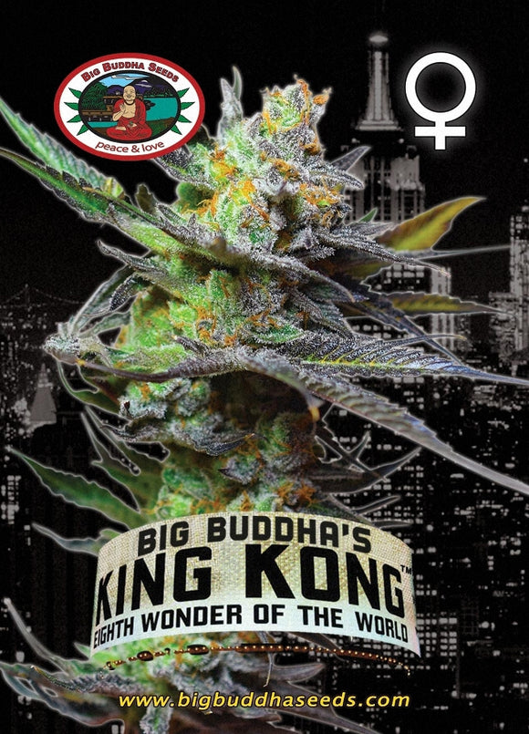 Big Buddha King Kong Feminised Seeds