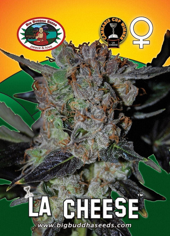 Big Buddha LA Cheese Feminised Seeds