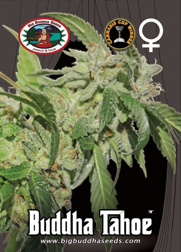 Big Buddha Buddha Tahoe OG Feminised Seeds