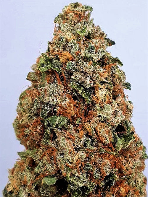 Big Head Dogstar Dawg Feminised Seeds