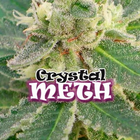 Dr. Underground Crystal M.E.T.H. Feminised Seeds