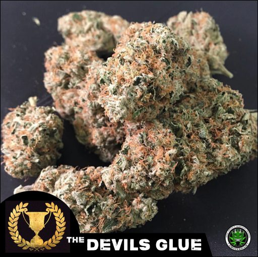 Devil's Harvest Devils Glue Feminised Seeds