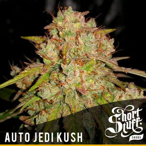 Short Stuff AUTO Jedi Kush Feminised Seeds