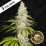 T.H. Seeds Mont Blanc Limited Edition Feminised Seeds