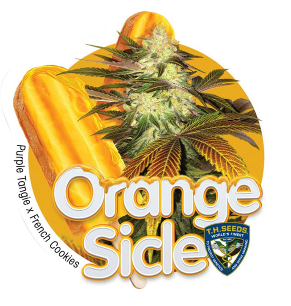 T.H. Seeds Orangesicle Limited Edition Feminised Seeds