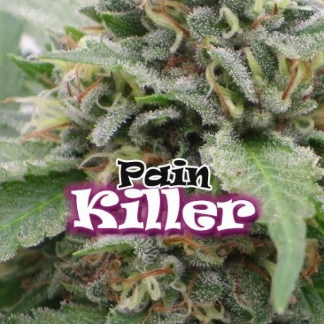 Dr. Underground Pain Killer Feminised Seeds