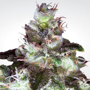 Paradise Seeds Original White Widow IBL Feminised Cannabis Seeds