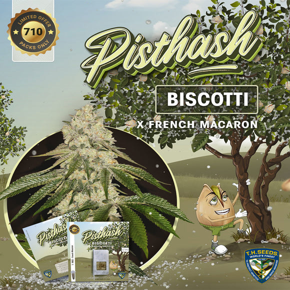 T.H. Seeds Pisthash Limited Edition Feminised Seeds