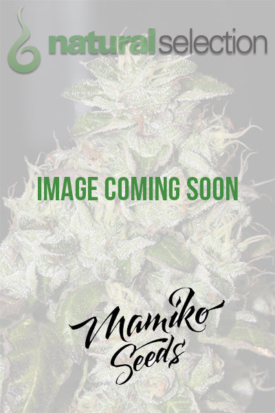 Mamiko Seeds Fire Sister Cookies Feminised Seeds