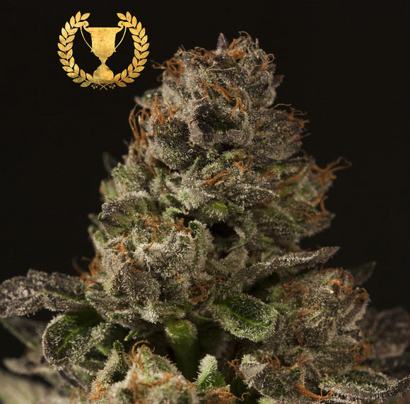 Devil's Harvest Strawberry Sour Diesel Feminised Seeds
