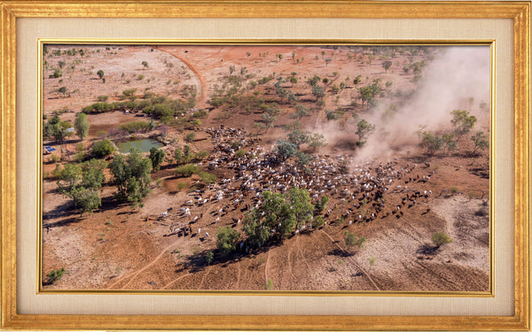Mustering at Quamby