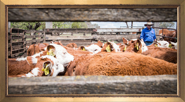 Bowen Herefords