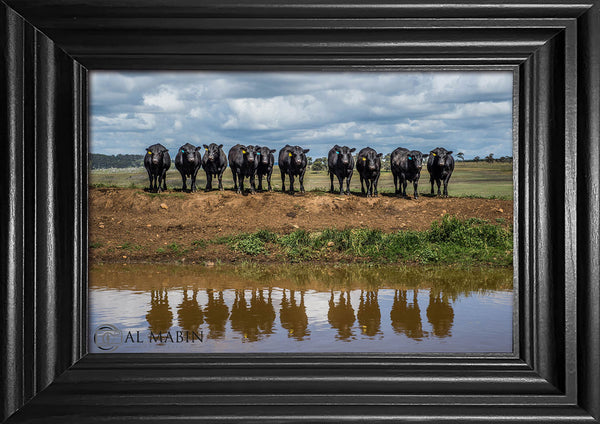 Bull reflection Bald Blair Angus