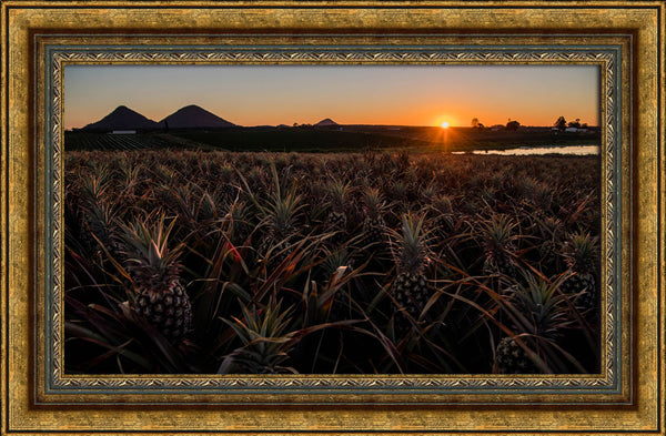 Pineapple sunrise over the Glasshouse Mountains