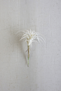 White Air Plant Small