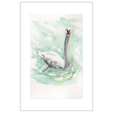 Majestic Swan, St. Gilgen, Austria Watercolor Postcard