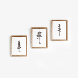 Pine Tree Prints | Set of three