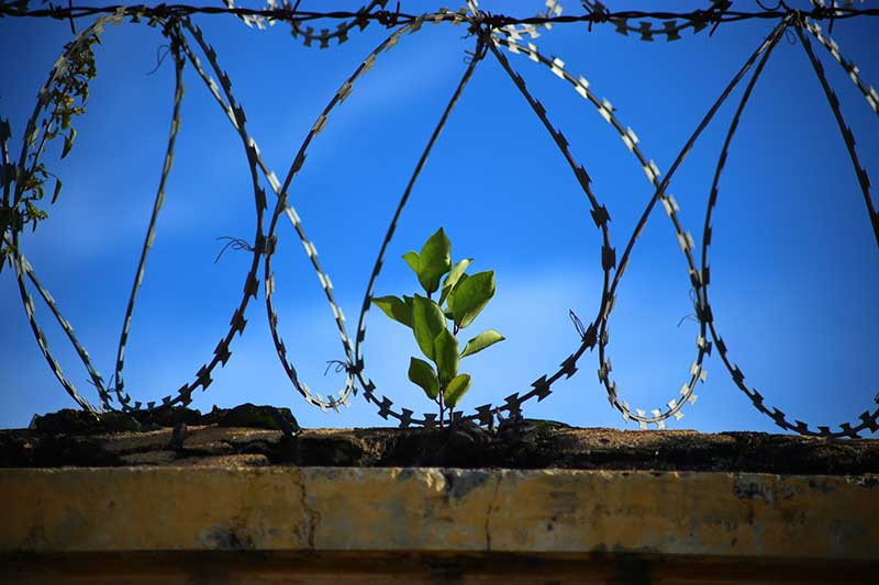 Prison Inmates Garden To Grow.