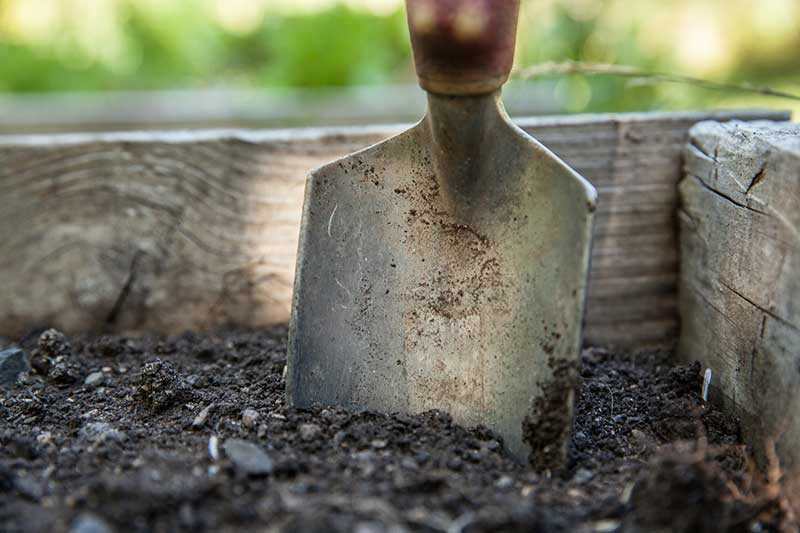 Common Fall Gardening Mistakes