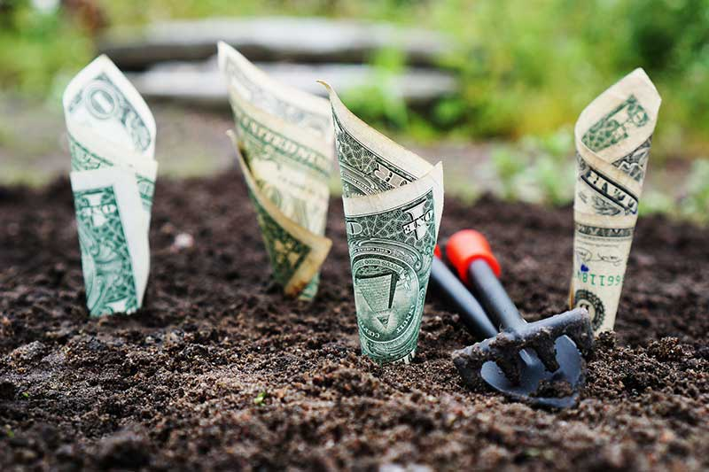 Acquiring Funds For School Gardens