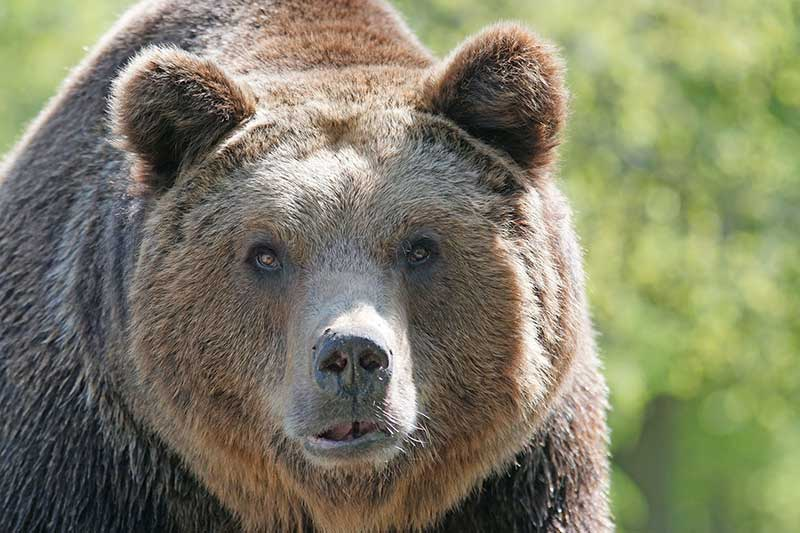 Bear Activity This Fall