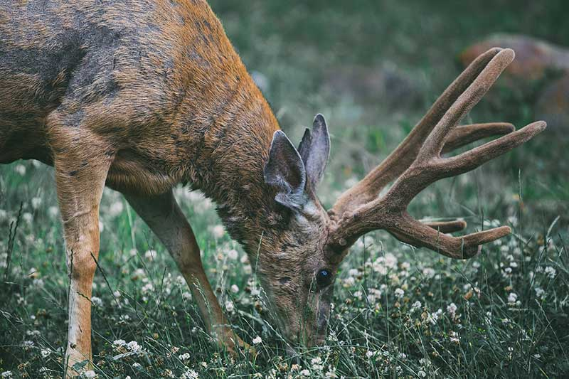 CWD Spreading To Humans?
