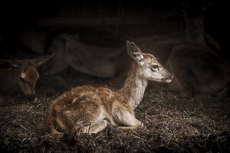 10% Of Deer Have CWD, KDWPT Says