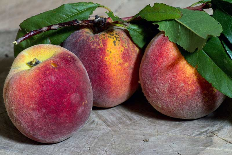 August Is Peach Month!
